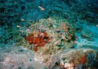 珊瑚と魚.jpg